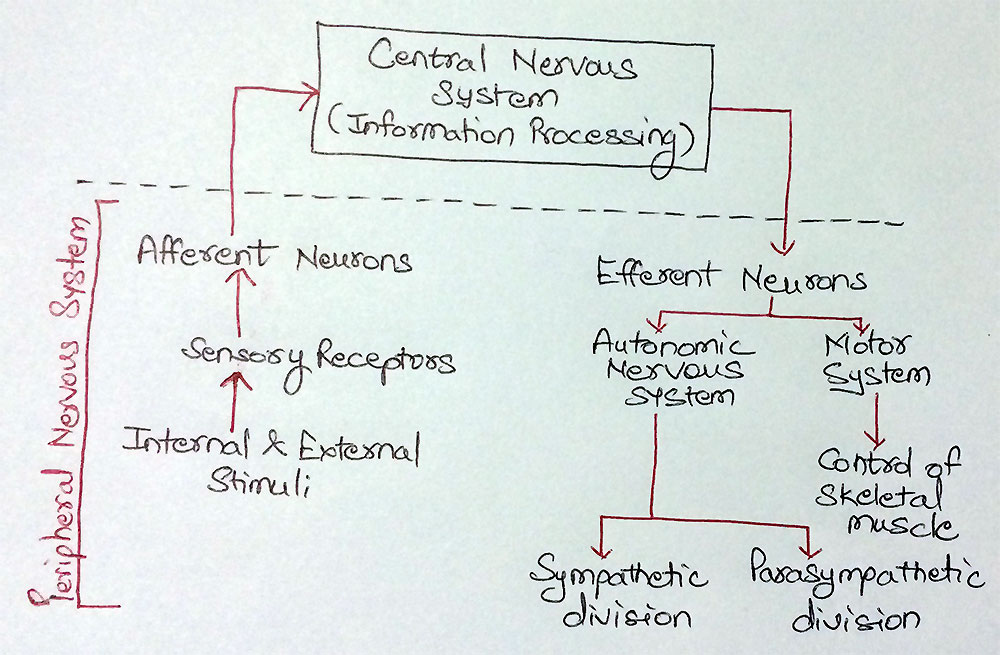 Hierarchy of PNS
