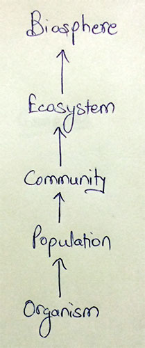 Levels of Ecological organization