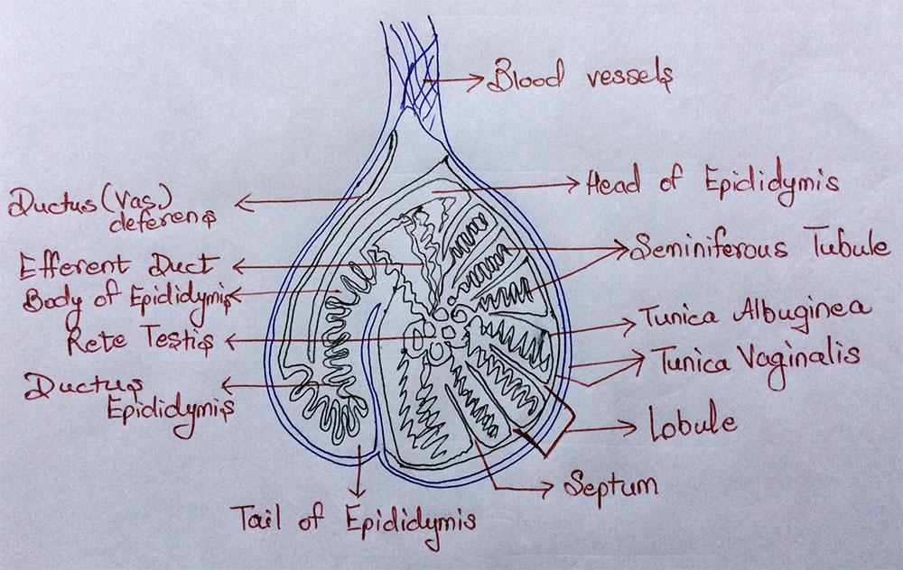 biology 1000 notes