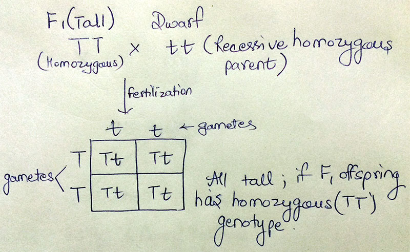 AIPMT - Test Cross(if F1 is homozygous)