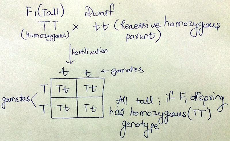 AIPMT - Test Cross(if F1 is homozygous)
