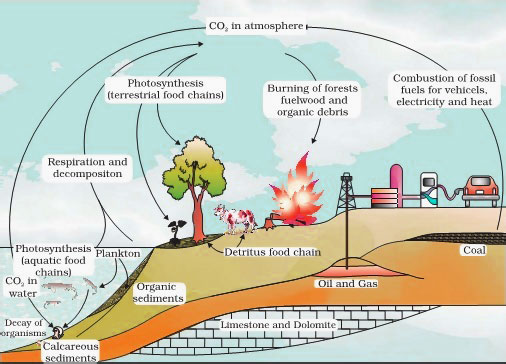 AIPMT Biology - Simplified Carbon cycle