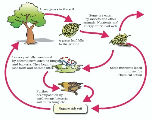 AIPMT Biology - Decomposition Cycle