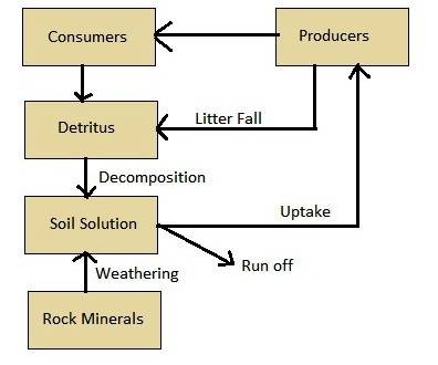 AIPMT Biology - Phosphorus cycle in terrestrial ecosystem