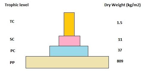 AIPMT Biology - Pyramid of Biomass