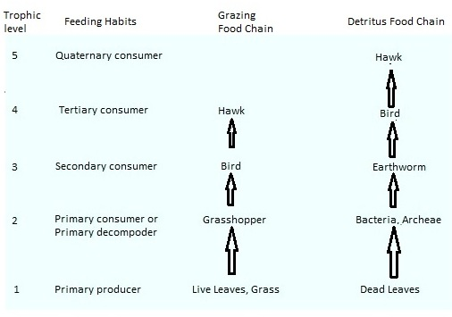 AIPMT Biology - Trophic Levels in Grazing and Detritus Food Chains