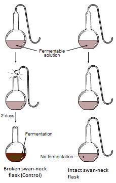 Pasteur Experiment-Biotrick-Biology-NEET-AIPMT