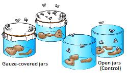 Redi's Experiment- Biotrick-NEET-AIPMT-Biology