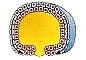 Gastrulation: Epiboly - NEET- AIPMT-Biology-Biotrick
